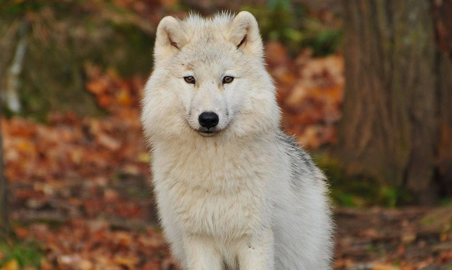 significance of white coloured animal